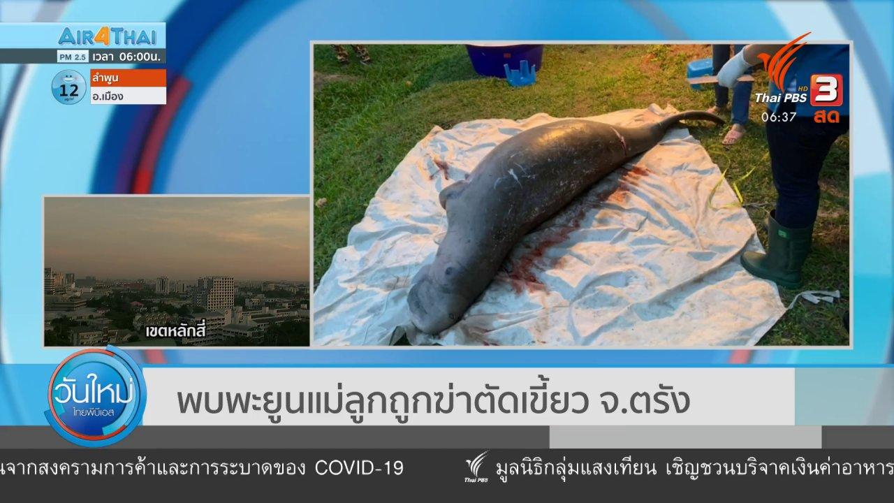 วันใหม่  ไทยพีบีเอส - พบพะยูนแม่ลูกถูกฆ่าตัดเขี้ยว จ.ตรัง
