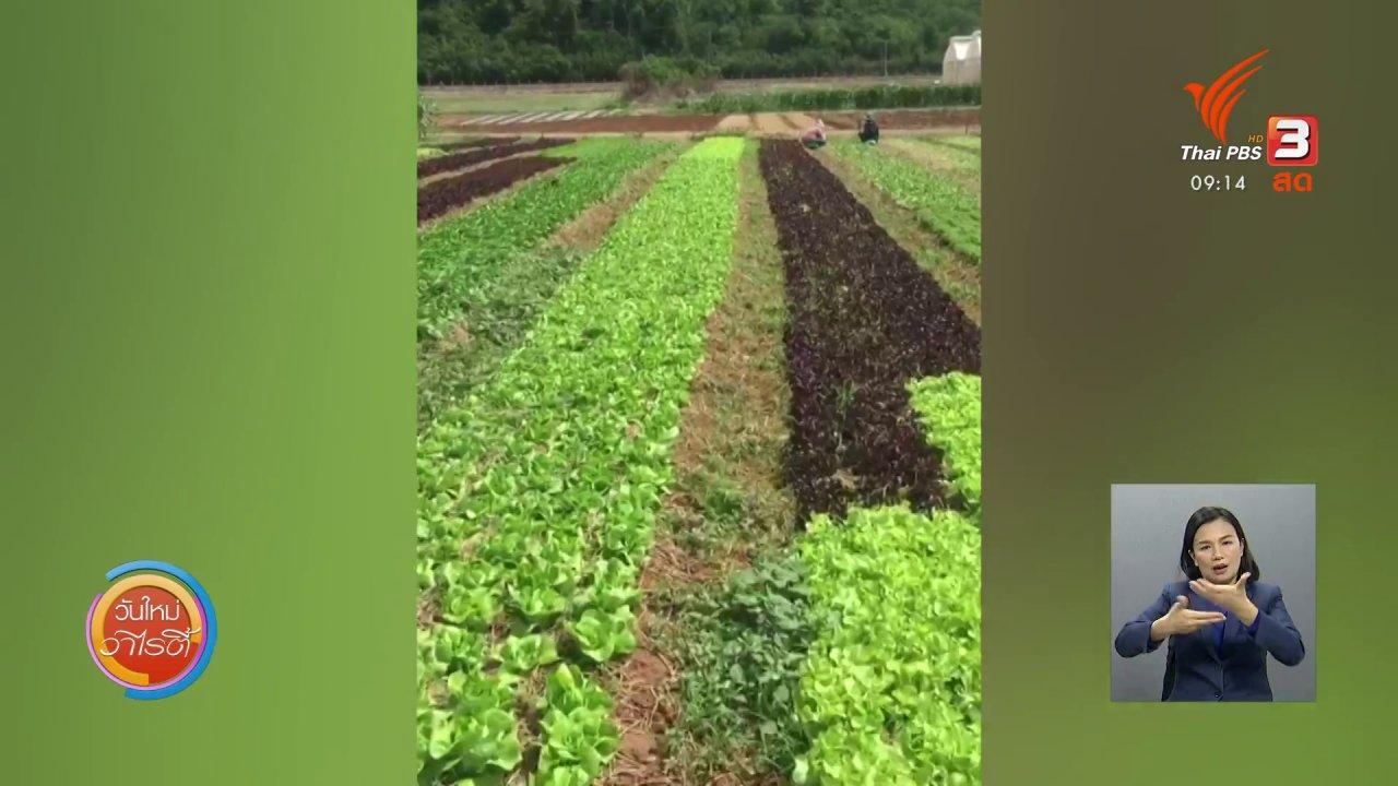 วันใหม่วาไรตี้ - ประเด็นสังคม : สร้างความมั่นคงทางอาหารด้วยผักปลอดสารเพื่อคนเมือง