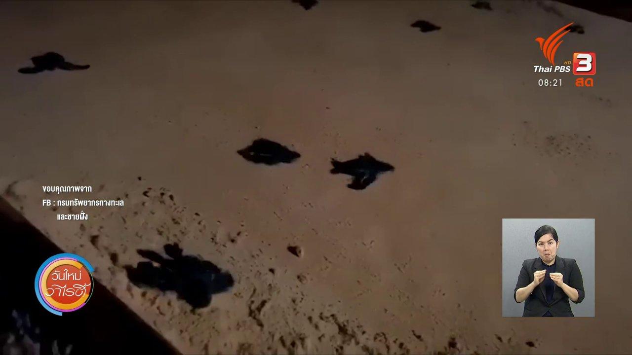 วันใหม่วาไรตี้ - จับตาข่าวเด่น : เต่ามะเฟือง สัตว์ที่ถูกคุกคามจากมนุษย์