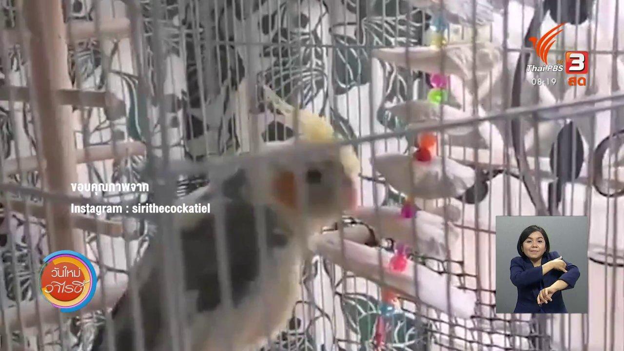 """วันใหม่วาไรตี้ - จับตาข่าวเด่น : """"สิริ"""" นกแก้มส้มขี้อ้อน"""