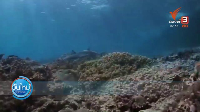 ชมฉลามหูดำใต้ทะเลเกาะพีพี จ.กระบี่