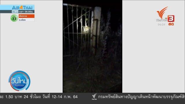จับได้แล้วเสือหลุดจากกรงสถานีเพาะเลี้ยงฯ จ.ราชบุรี
