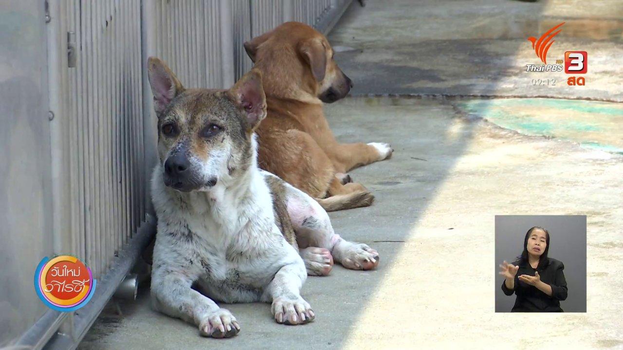 วันใหม่วาไรตี้ - ประเด็นสังคม : เว็บไซต์ RightBaan สื่อกลางหาบ้านให้สุนัขและแมวจร