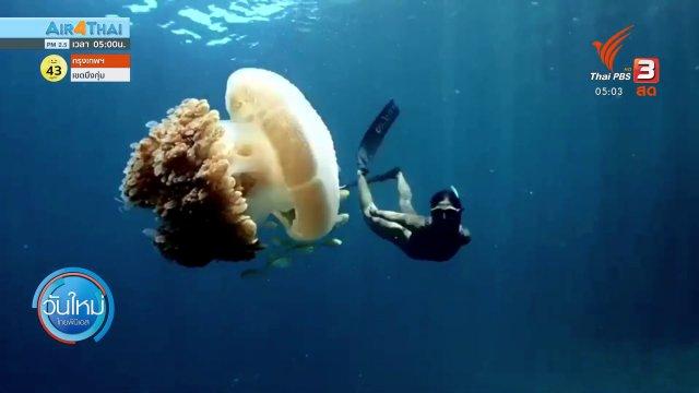 ชมความงามใต้ท้องทะเลเกาะพีพี จ.กระบี่