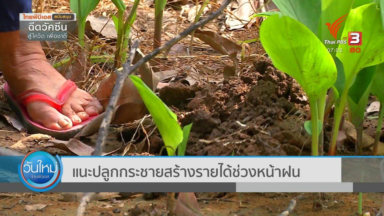 วันใหม่  ไทยพีบีเอส - 2 องศา ทำมาหากิน ดิน ฟ้า อากาศ : แนะปลูกกระชายสร้างรายได้ช่วงหน้าฝน