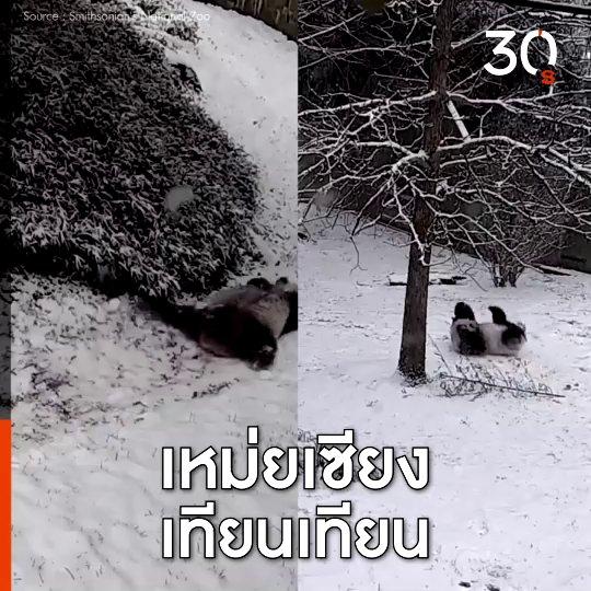 Around The World - แพนด้ายักษ์ คลุกหิมะ