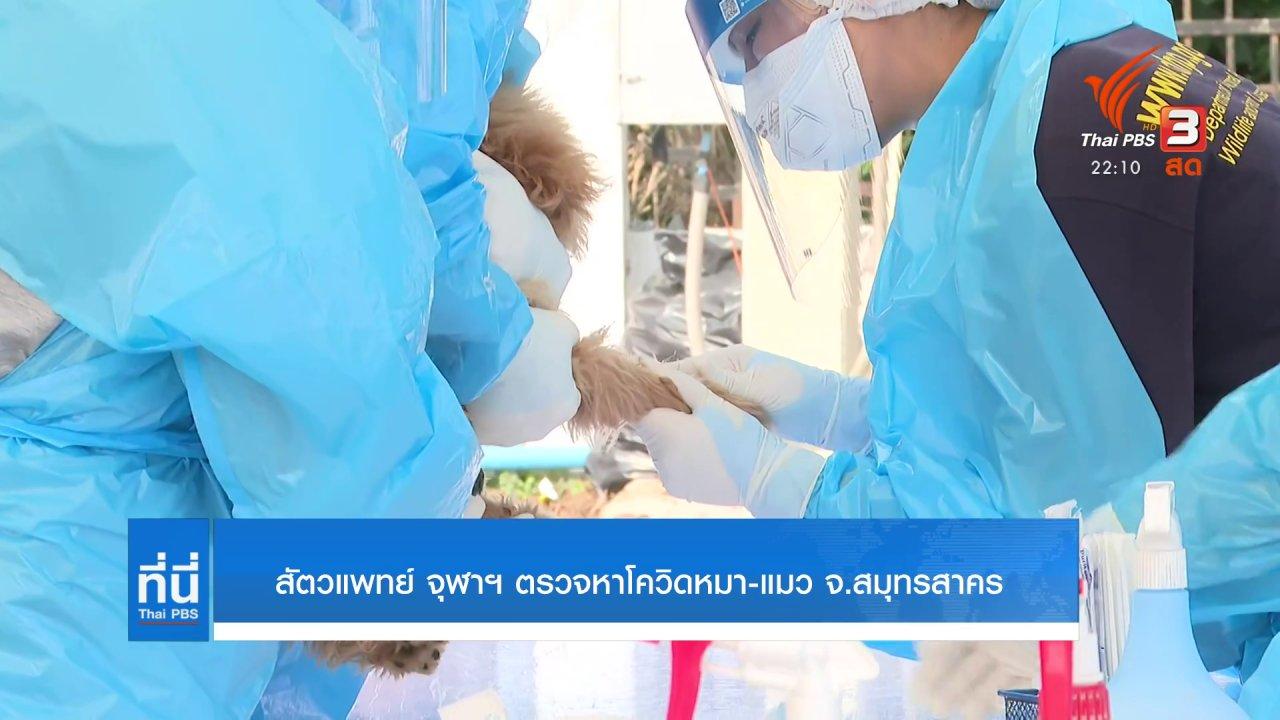 ที่นี่ Thai PBS - สัตวแพทย์ จุฬาฯ ตรวจหาโควิด หมา - แมว