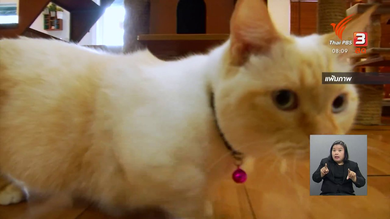 วันใหม่วาไรตี้ - ชัวร์หรือมั่ว : รักษาโรคหัดในแมวด้วยยาเขียว ?