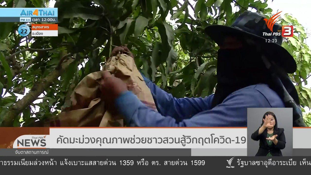 จับตาสถานการณ์ - คัดมะม่วงคุณภาพช่วยชาวสวนสู้วิกฤตโควิด-19