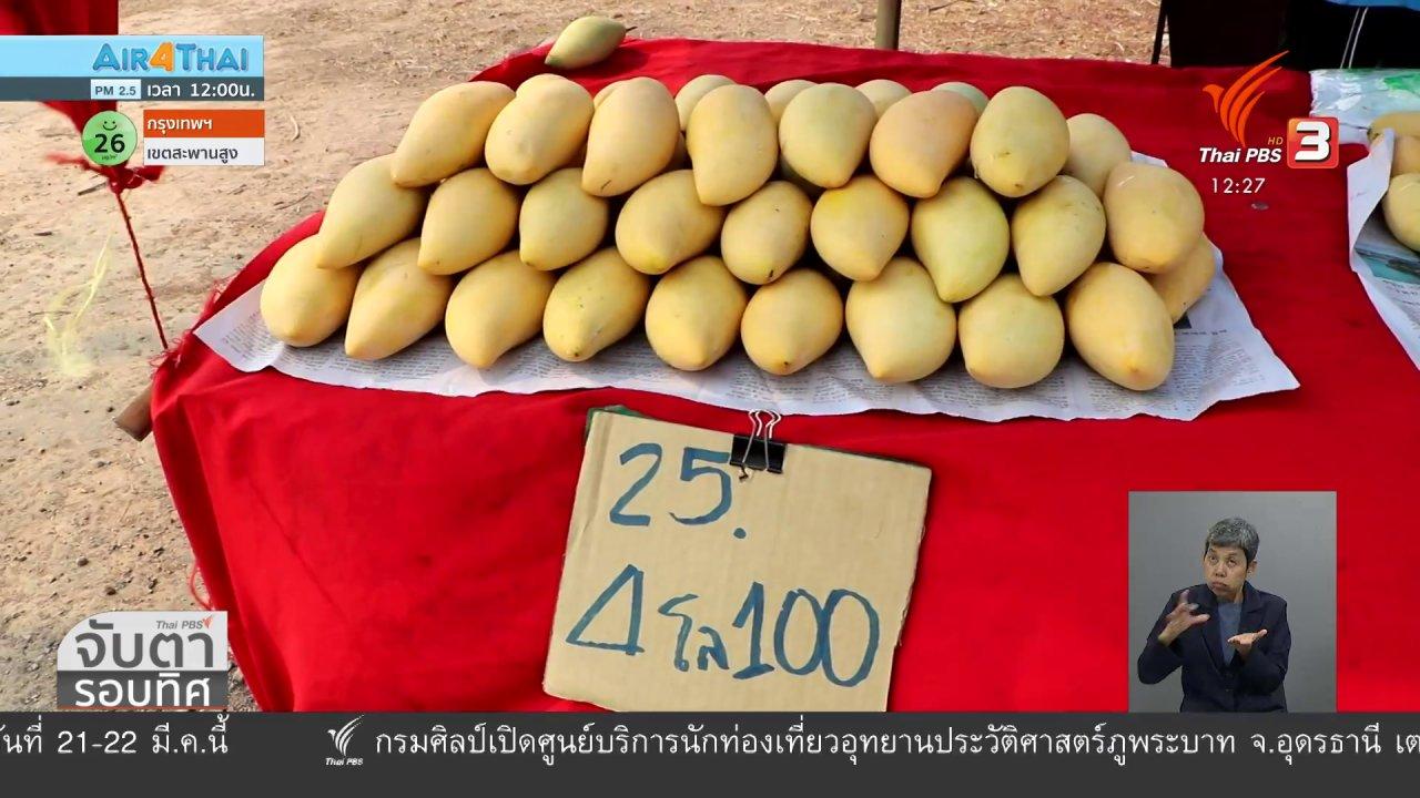 จับตาสถานการณ์ - ชาวสวนมะม่วงร้องแก้ปัญหาราคาตกต่ำ