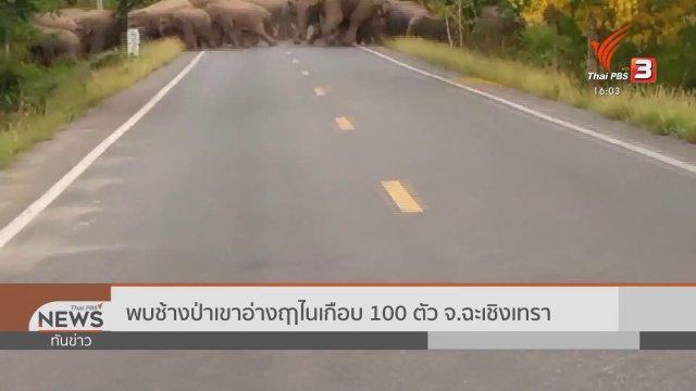 พบช้างป่าเขาอ่างฤาไนเกือบ 100 ตัว จ.ฉะเชิงเทรา