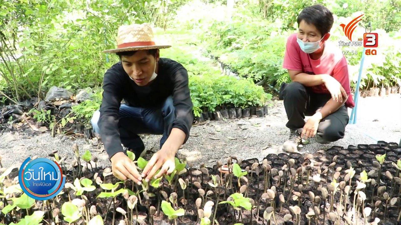 วันใหม่  ไทยพีบีเอส - เกษตรกรเพาะพันธุ์ไม้ป่า ศก. เปิดขายออนไลน์