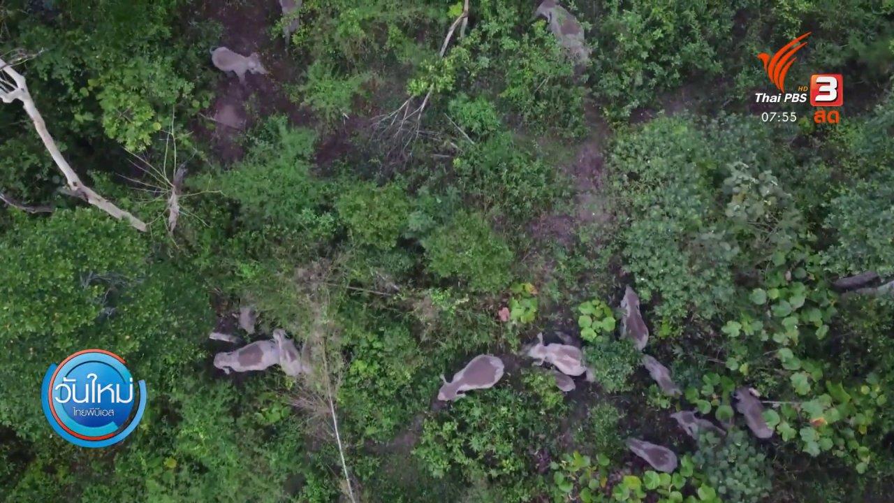 ช้างป่าเขาใหญ่ออกหากินใกล้ที่ชาวบ้าน