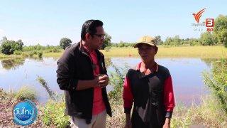 วันใหม่  ไทยพีบีเอส C-Site Focus พิกัดข่าว : เกี่ยวข้าวหนีน้ำท่วม อ.รัตนบุรี จ.สุรินทร์
